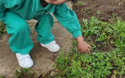 Ajudando na horta- Jardim de Infância Os Amiguinhos Terlu