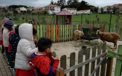 Visita à horta e aos animais – Jardim de Infância