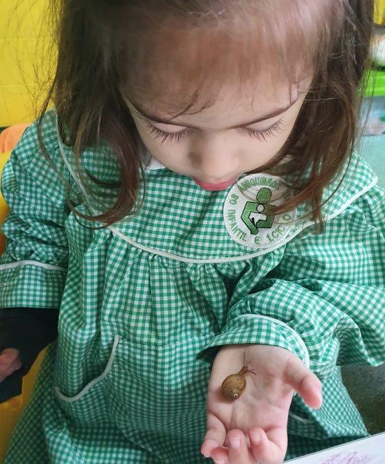 Descobrindo os Caracóis- Jardim de Infância Os Amiguinhos Terlu