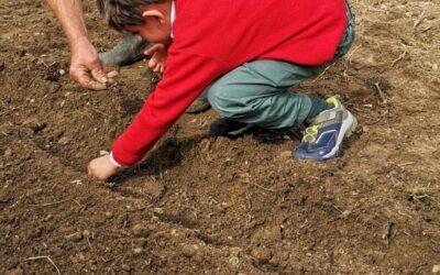 O Jardim de Infância foi semear feijões!