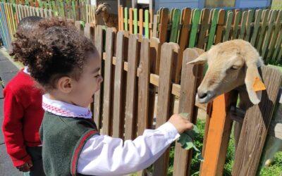 Trabalhando os Animais no Jardim de Infância