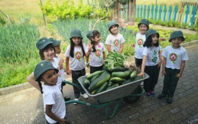 O Jardim de Infância foi à horta apanhar curgetes