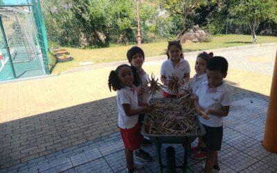 Atividade na horta – partir feijão