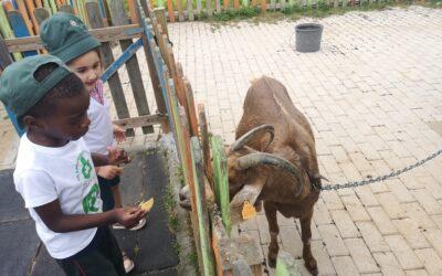 alimentando os animais – Jardim de Infância