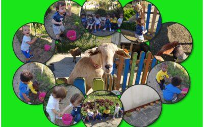 A Sala dos Porquinhos foi à horta!