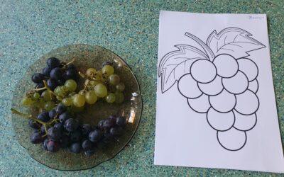 Prova das Uvas- Amiguinhos Terlu