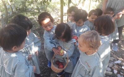 Os Pintainhos foram à horta apanhar maçãs