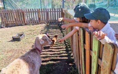 Dia Mundial dos Animais – Sala dos Cabritinhos